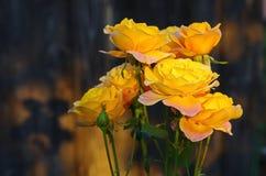 Rosas amarillas con las sombras Imagenes de archivo