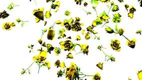 Rosas amarillas que caen en el fondo blanco ilustración del vector