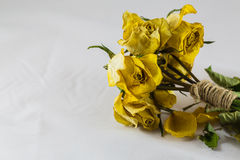 Rosas amarillas secas Fotografía de archivo