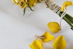 Rosas amarillas secas Imágenes de archivo libres de regalías