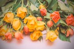 Rosas amarillas y anaranjadas en un fondo de madera ligero Women s d imagen de archivo