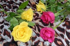 Rosas amarillas y rosadas en una bufanda con el modelo del leopardo Fotos de archivo