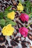 Rosas amarillas y rosadas en una bufanda con el modelo del leopardo Fotografía de archivo libre de regalías