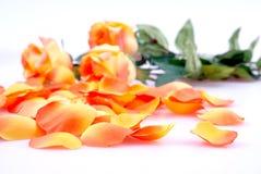 Rosas anaranjadas Imagenes de archivo