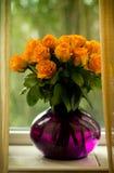 Rosas anaranjadas en un florero púrpura de cristal Fotografía de archivo libre de regalías