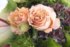 Rosas anaranjadas y Hortensia Fotografía de archivo libre de regalías