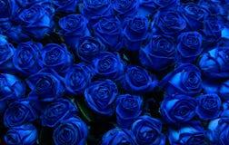 Rosas azuis imagens de stock royalty free