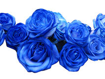 Rosas azuis Imagem de Stock
