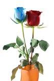 Rosas azules y rojas Fotografía de archivo libre de regalías