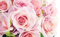 Rosas búlgaras imagem de stock royalty free