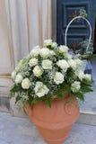 Rosas blancas Imagen de archivo libre de regalías