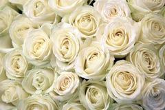 Rosas blancas Imagen de archivo