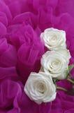 Rosas blancas Foto de archivo