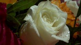 Rosas blancas con descensos del agua en el sol de la ma?ana Ramo de flores Primer