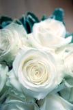 Rosas blancas de la boda Fotos de archivo