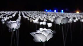 Rosas blancas del LED Foto de archivo libre de regalías