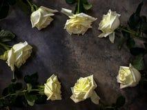 Rosas blancas dispuestas en el piso concreto Imagenes de archivo