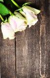 Rosas blancas en espacio de madera del texto libre del fondo Vintage retro Fotografía de archivo libre de regalías