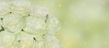 Rosas blancas frescas con del tinte del cierre el fondo verde claro para arriba - Foto de archivo libre de regalías