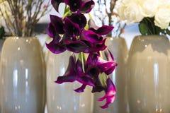 Rosas blancas y calas violetas Imagenes de archivo