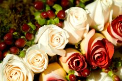 Rosas blancas y rojas Imagenes de archivo