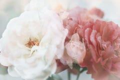 Rosas blancas y rojas Fotografía de archivo libre de regalías