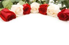Rosas blancas y rojas aisladas en el blanco Fotografía de archivo