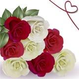 Rosas blancas y rojas en el fondo blanco Foto de archivo libre de regalías