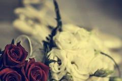 Rosas blancas y rojas en el jardin. Detalle de ramo de rosas blancas y rojas para novia Royalty Free Stock Photos