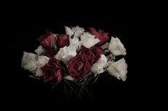 Rosas blancas y rojas en un vidrio Foto de archivo