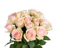 Rosas bonitas Imagem de Stock Royalty Free