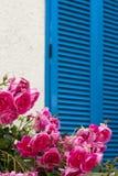 Rosas bonitas da cor-de-rosa do verão, no jardim Fotografia de Stock Royalty Free