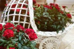 Rosas bonitas em uma cesta decorativa Fotos de Stock Royalty Free