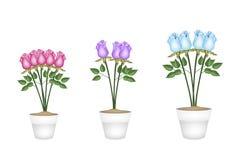 Rosas bonitas em uns potenciômetros de flor cerâmicos da árvore Fotografia de Stock Royalty Free