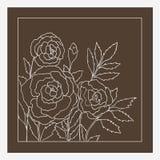 Rosas bonitas isoladas no fundo bege escuro Ilustração desenhada mão do vetor Imagens de Stock Royalty Free