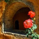 Rosas bonitas no potenciômetro Imagem de Stock