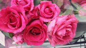 Rosas bonitos imagem de stock royalty free