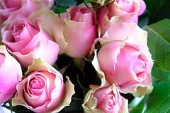 Rosas borrosas del rosa del fondo Imagenes de archivo