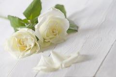 Rosas brancas Fotos de Stock Royalty Free