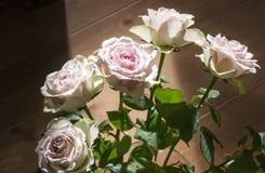 Rosas brancas Fotografia de Stock