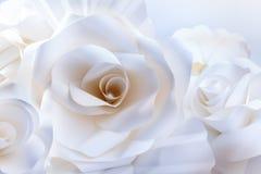 Rosas brancas bonitas no fundo branco. Imagens de Stock
