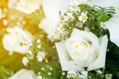 Rosas brancas e margaridas Foto de Stock