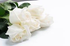 Rosas brancas em um branco imagem de stock