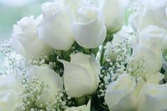 Rosas brancas puras elegantes Fotos de Stock Royalty Free