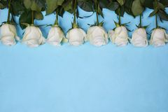 Rosas brancas situadas na linha no fundo azul fotos de stock