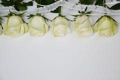 Rosas brancas situadas na linha no fundo branco fotografia de stock royalty free