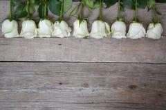 Rosas brancas situadas na linha no fundo de madeira Imagem de Stock