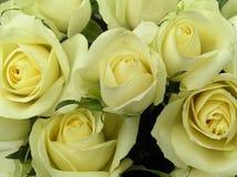 Rosas branco-amareladas Imagens de Stock