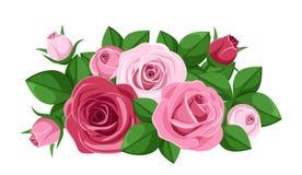 Rosas, capullos de rosa y hojas rojos y rosados. ilustración del vector