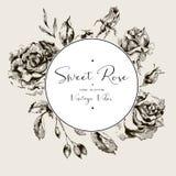 Rosas cartão floral preto e branco do vintage do vetor, flores ilustração royalty free